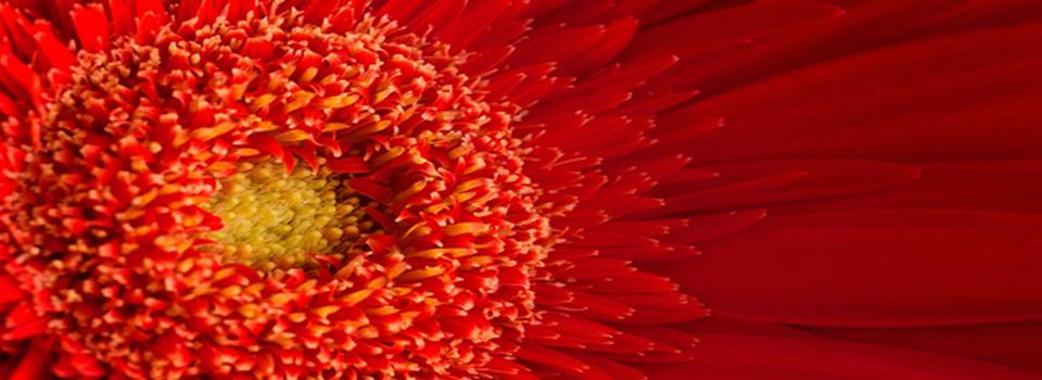 Blüten in der TCM unverzichtbar